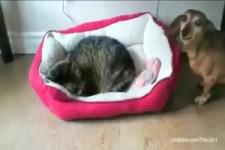 Katzen sind Bettendiebe