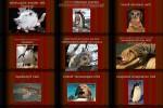 Tierkunde.pps auf www.funpot.net