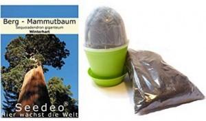Anzuchtset Berg - Mammutbaum!