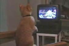 Video - TV und Katze