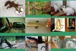 Tiere-entdecken-ihr-Spiegelbild.pps auf www.funpot.net