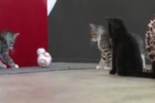 Katzen und ein kleiner Droid