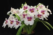 Blumen0316