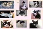 Katzen-mit-Merkmalen-.pps auf www.funpot.net