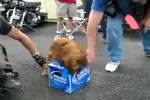 Guter-Wachhund.mp4 auf www.funpot.net