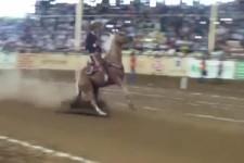 Pferde-Bremstest