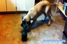 Hund und Ananas