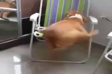 Holger und der Kampf um den Stuhl