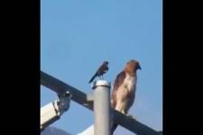 Dieser Vogel hat die Ruhe weg