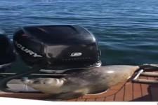 wenn sich der Seehund rettet