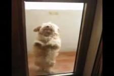 Latino-Tanz-Hund