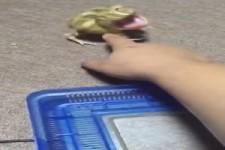 Frosch ist genervt