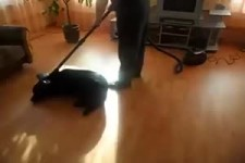 Spiel mit Hund und Staubsauger
