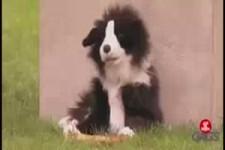 Versteckte Kamera - Der begehrte Hundeknochen