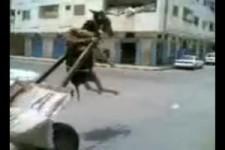 Der schwebende Esel