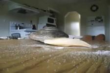 Die fressende Muschel