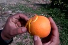 Was man aus einer Orange alles machen kann