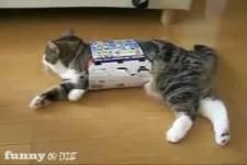 Lustiges Katzenspielzeug