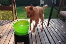 Hund Beschaeftigung