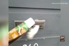 der Tiger hinter dem Briefkasten