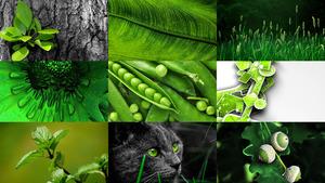 Grün 16