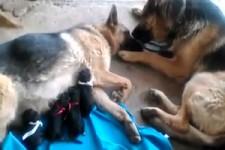 Liebe unter Tieren