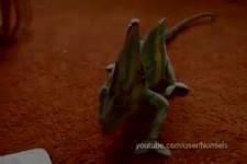 Chameleon ist erschrocken
