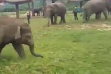 Tiere lieben sich