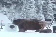 Der Bär und die Waschmaschine
