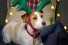 Fiffi macht sich schön für Weihnachten