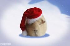 Iss nicht so viel an Weihnachten