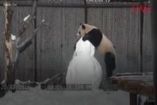 Pandabär und Schneemann
