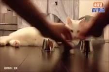 Geniale Katze