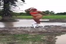 Schwungvoller Tanz