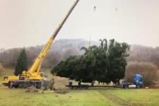 Dieser Baum ist zu schwer