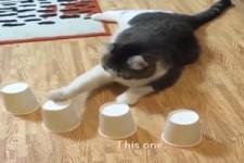 kluge Katze