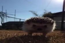Super Video von einem Igel
