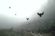 und sie können doch fliegen