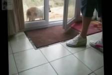 Schön Schuhe abtreten