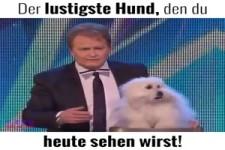Der lustige Hund