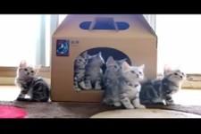 Herzige Katzen
