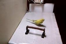 Ein schlauer Vogel