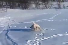 was für Hundeliebhaber: er hat seinen Spaß im Schnee!