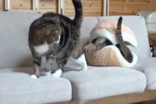 Macaron Bett mit Maru und Hana