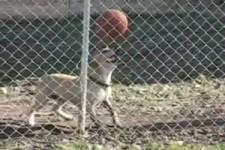 Cooler Fußball-Hund