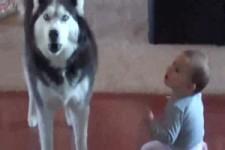 Hund spricht mit Baby