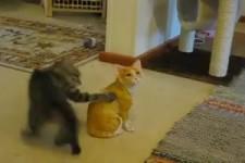 Damit hat die Katze nicht gerechnet