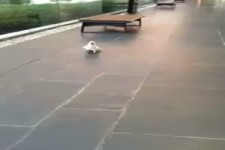 Komischer Hund