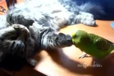 Katze und Wellensittich