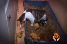 Katze mit Kueken